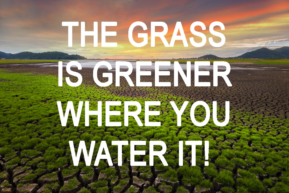 Read more about the article What's Up Wednesday – The Grass May Be Best Where You're At